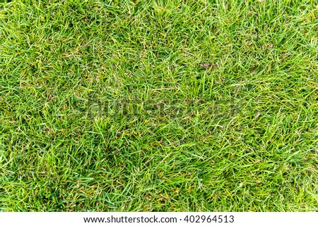 Green lawn for background. Juicy green grass in a meadow. The bright colors of spring.  - stock photo