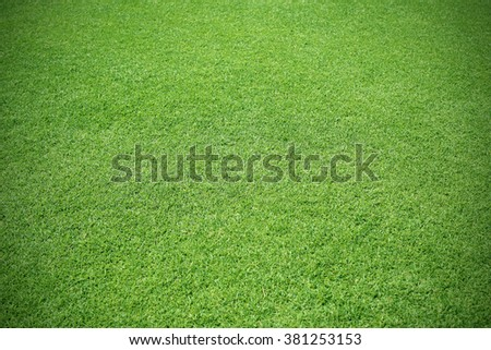 Green lawn for background texture - stock photo