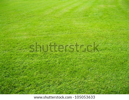Green lawn in perspective - stock photo