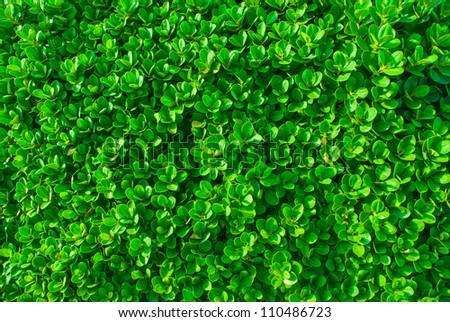 Green lawn in Tu - stock photo