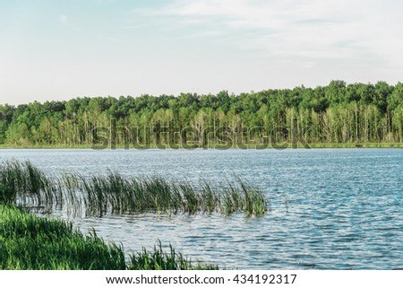 Green lawn near river in the forest. - stock photo