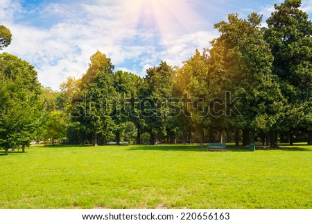 Green lawn- trees in park under sunny light with sun beams - stock photo