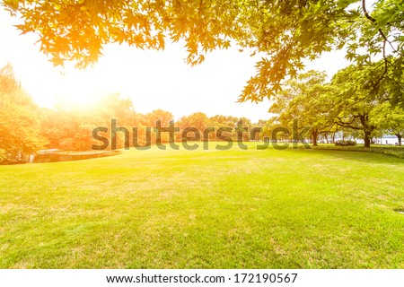 Green lawn with sunlight - stock photo