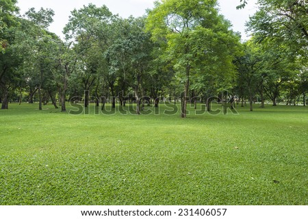 Green lawn with trees in park - stock photo
