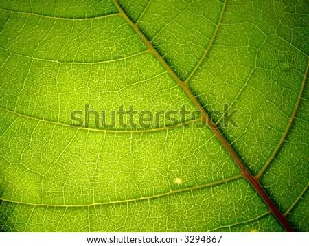 green leaf 1 - stock photo