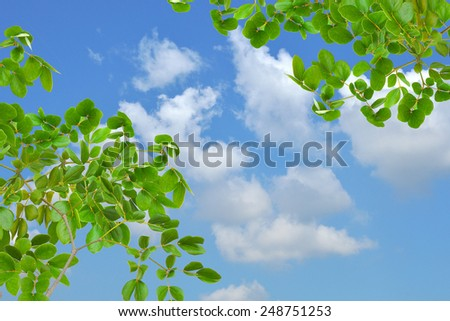 green leaf and beautiful blue sky - stock photo