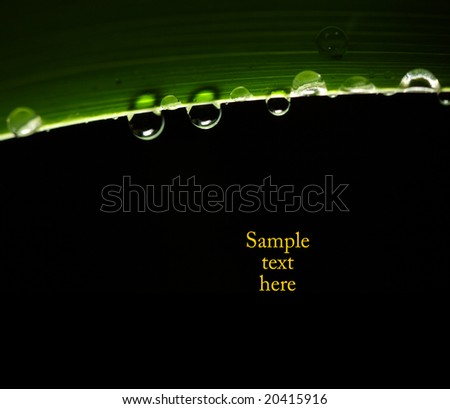 green leaf and drop background macro image with space for text - stock photo
