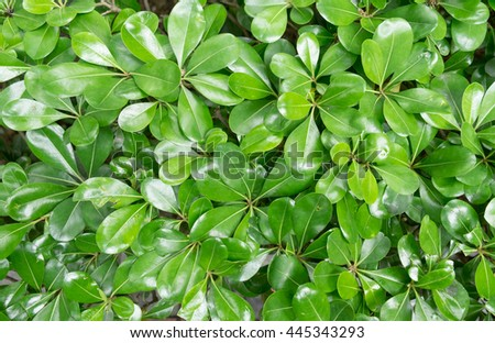 green leaf and gray background - stock photo