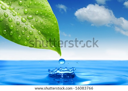 green leaf and water drop - stock photo