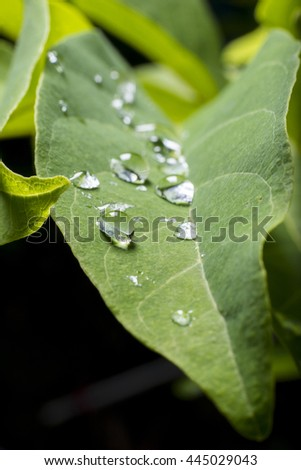 green leaf and water drops detail - stock photo