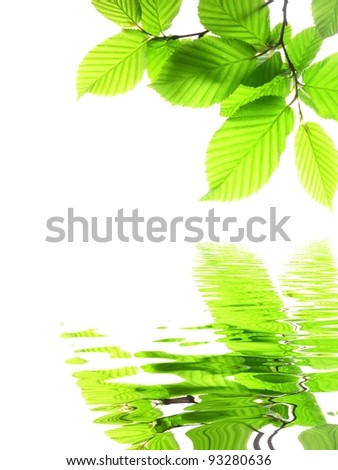 green leaf and water reflection on summer day - stock photo