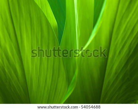 Green leaf background abstract of nature - stock photo