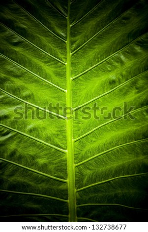 Green leaf background texture. - stock photo