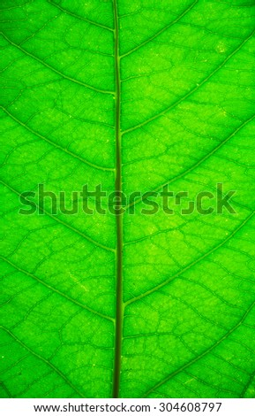 Green leaf background texture - stock photo