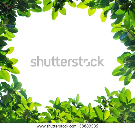 Leaf Border Stock Photos, Images, & Pictures | Shutterstock