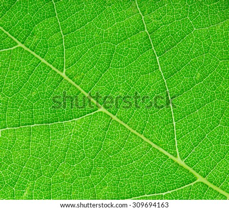 green leaf close-up as a background - stock photo