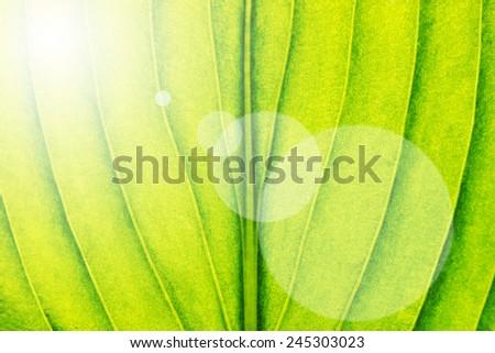 Green leaf close-up background. Macro background - stock photo