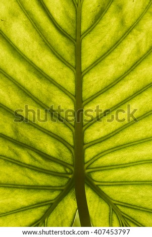 Green leaf close-up texture - stock photo