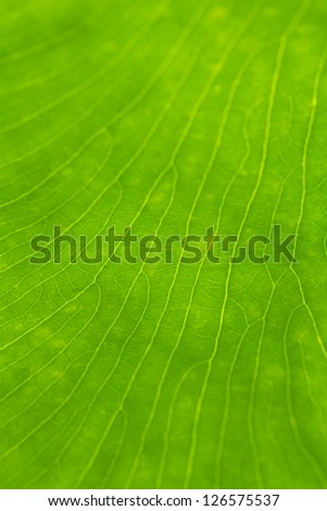 Green leaf closeup - stock photo