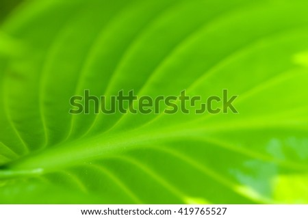 green leaf closeup soft focus - stock photo
