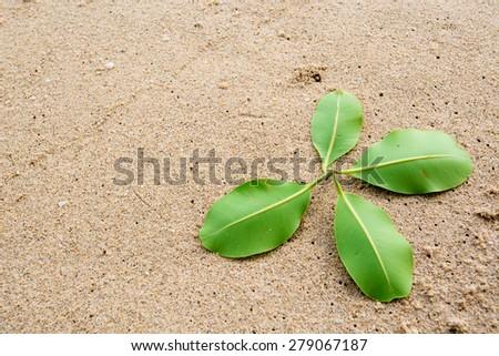 Green leaf drop on sand beach - stock photo