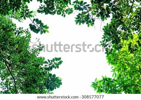 Green leaf frame border isolated on white background - stock photo