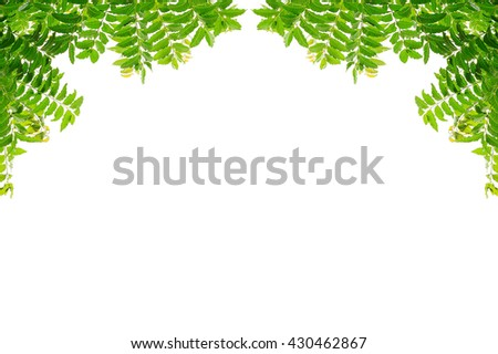 Green leaf frame isolated on white background, Tiny green leaf - stock photo