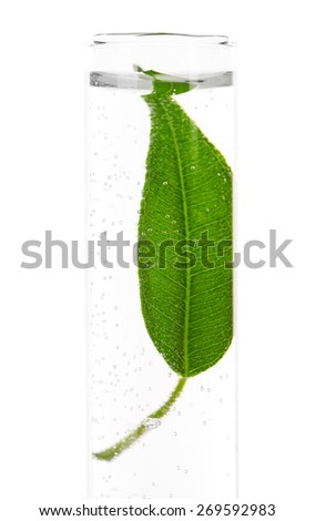 Green leaf in test tube isolated on white - stock photo