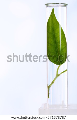 Green leaf in test tube on color background - stock photo