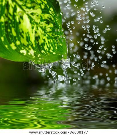 Green leaf in the rain. Shallow DOF - stock photo