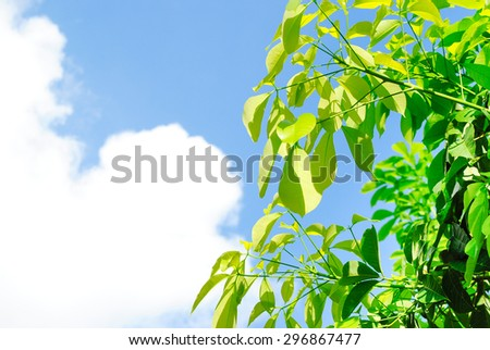 green leaf in the sky - stock photo