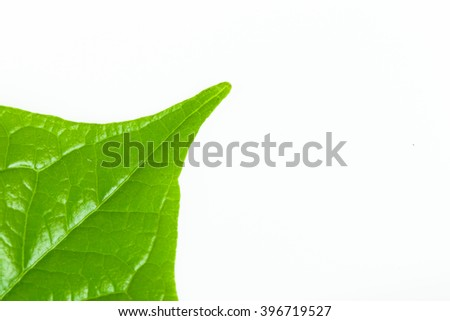 Green leaf isolated background. - stock photo