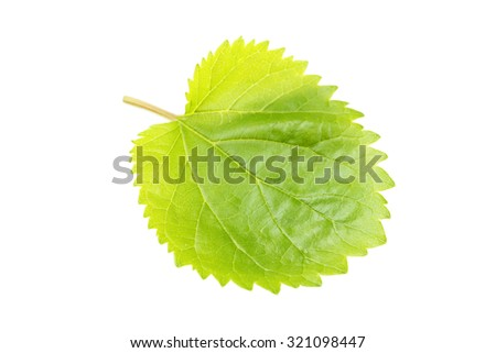 Green leaf isolated on a white - stock photo