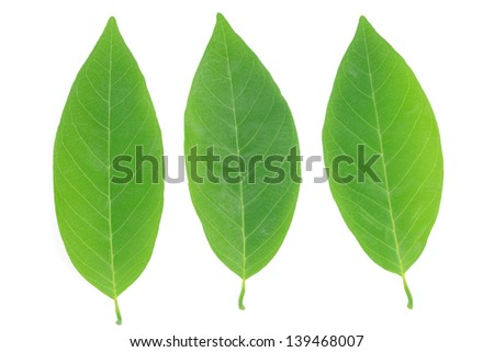 Green leaf isolated on white background. - stock photo