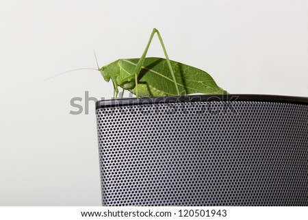 Green Leaf Katydid closeup - stock photo