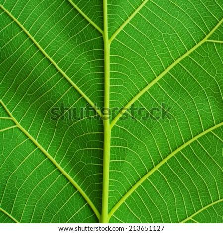 Green leaf macro - stock photo