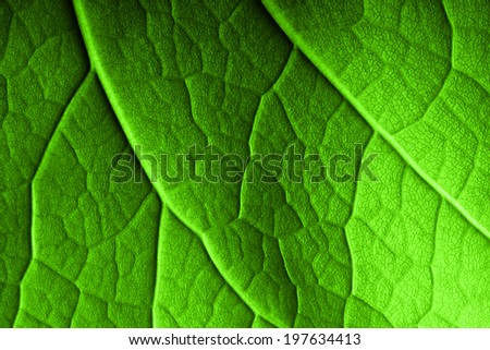 Green leaf macro background. - stock photo