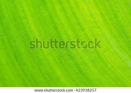 Green leaf macro background - stock photo