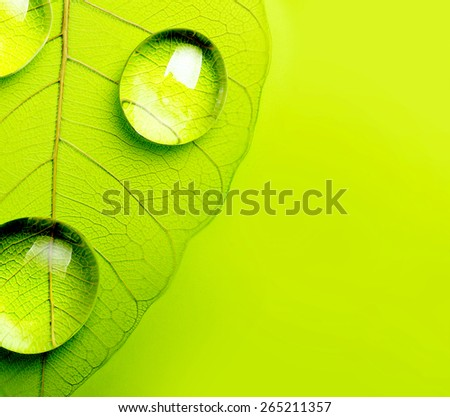 Green leaf macro, soft focus on water drops. Shallow depth of field. - stock photo