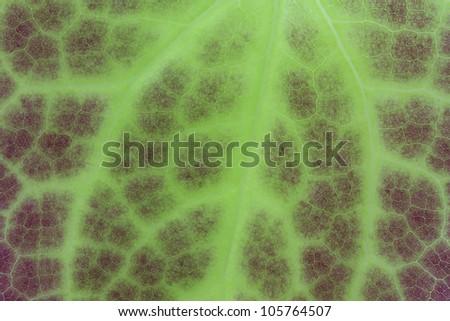 Green leaf of an Epimedium flower, closeup - stock photo