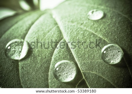 Green leaf of basil with water drops. Soft focus. - stock photo