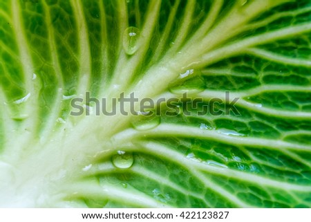 Green leaf of cabbage with drops of water in sunshine texture background close up macro - stock photo