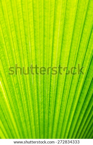 Green leaf of Palm tree texture background - stock photo