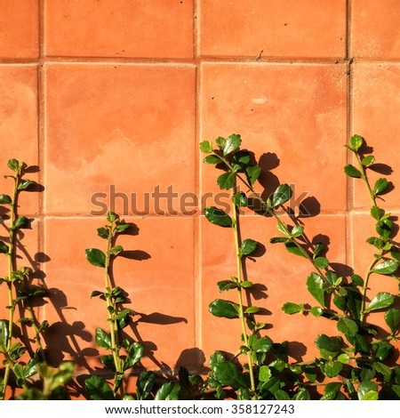 green leaf on wall fence - stock photo