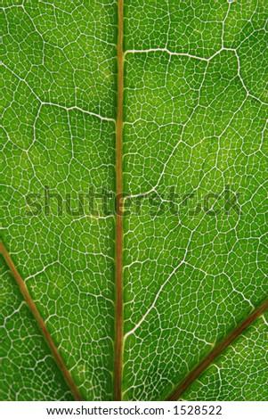 green leaf pattern indicating pathways - stock photo