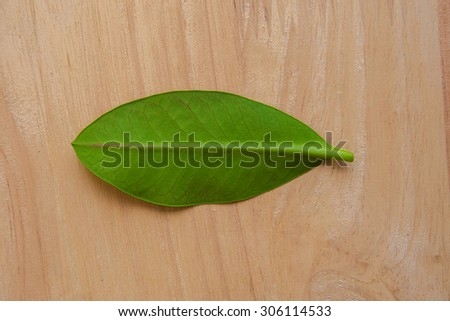 Green leaf placed on a wooden floor. - stock photo