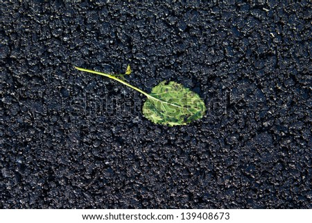 green leaf rolled into the new asphalt - stock photo