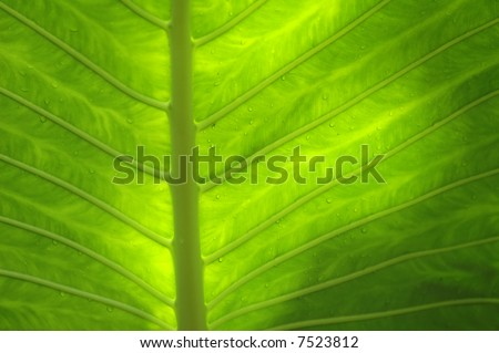 green leaf structure - stock photo