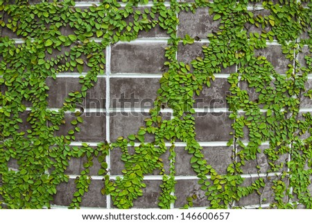 green leaf texture on brick wall  - stock photo