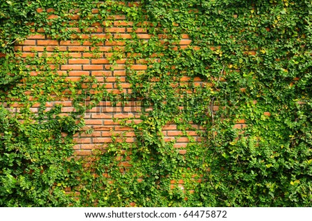 green leaf texture on red brick wall - stock photo